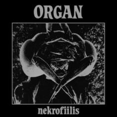 Organ : Nekrofiilis (LP)